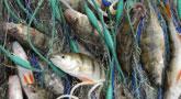 file/ELEMENTO_NEWSLETTER/16509/pesca_pescatori.jpg
