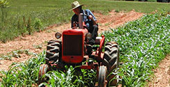 file/ELEMENTO_NEWSLETTER/19783/agricoltura_agricoltore_270917.jpg