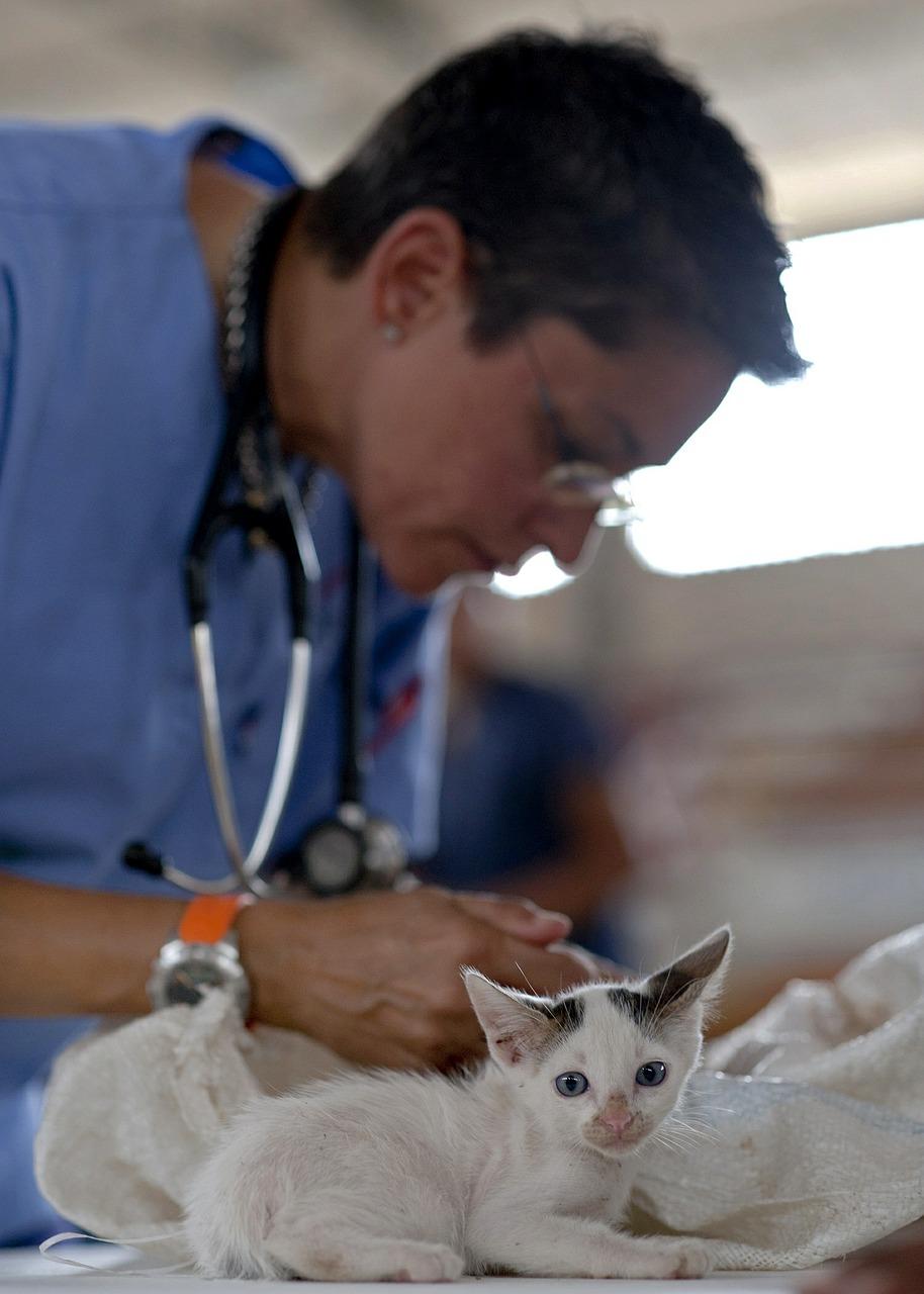 file/ELEMENTO_NEWSLETTER/19927/veterinario_kitten-569873_1280.jpg
