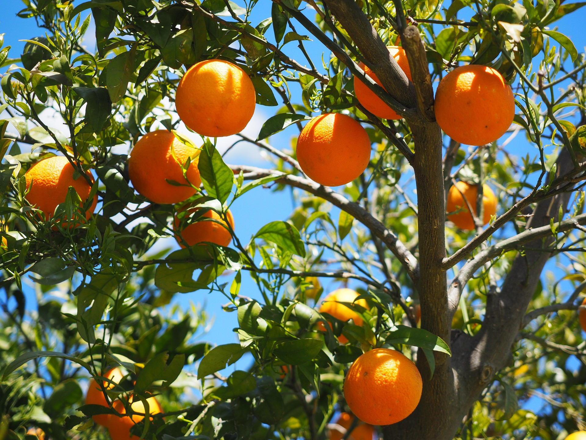file/ELEMENTO_NEWSLETTER/19945/ARANCE_oranges-1117628_1920.jpg
