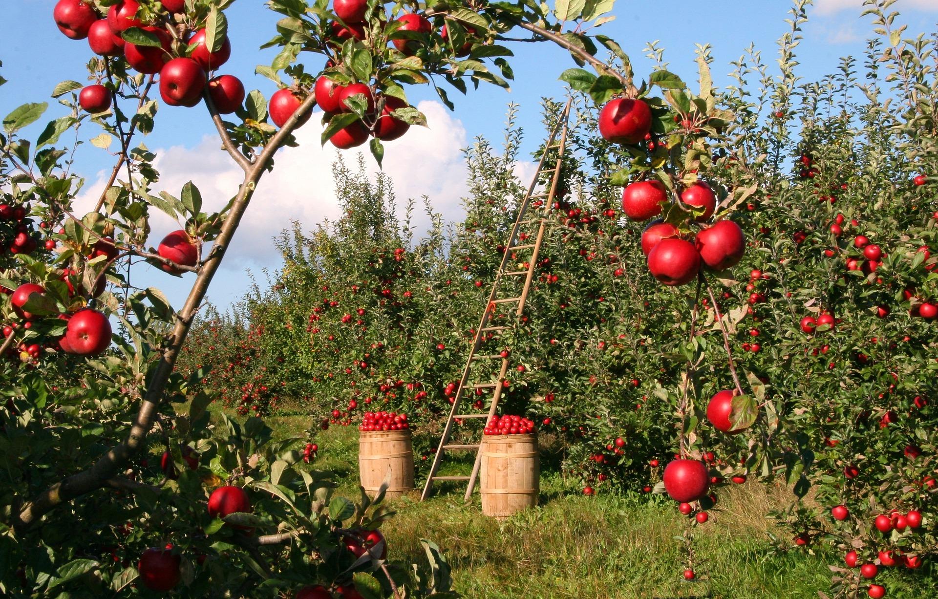 file/ELEMENTO_NEWSLETTER/20100/Agricoltura_mele_apple-1873078_1920.jpg