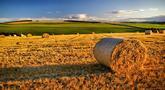 file/Image/dalleRegioni/agricoltura.jpg