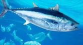 file/Image/dalleRegioni/fauna-ittica.jpg