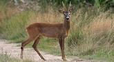 file/Image/dalleRegioni/fauna_selvatica.png