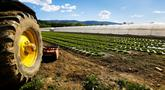 file/Image/dalleRegioni/imprese_agricole.jpg