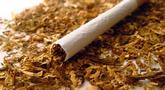 file/Image/dalleRegioni/tabacco.jpg